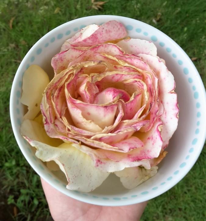Rose Karte